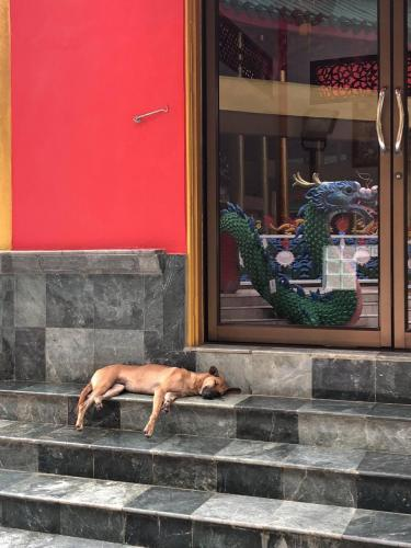 Snoozing Dog
